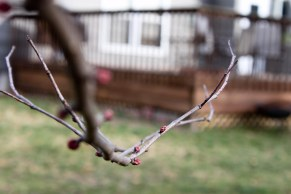 Spring Buds (10 of 14)