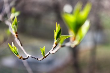 Spring Buds (2 of 14)