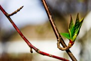 Spring Buds (3 of 14)