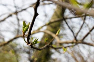 Spring Buds (4 of 14)