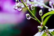 Waterdrops (2 of 10)