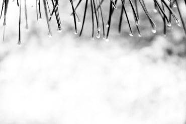 Waterdrops (7 of 10)